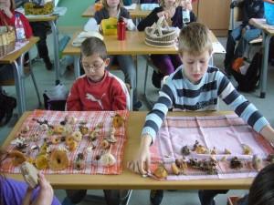 Wieder in der Schule angelangt, breitete jeder Schüler sein gesammelten Werke aus und es wurden noch einige besondere Funde, wie der Grüne Knollenblätterpilz vorgestellt.