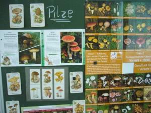 Da nun die Herbstferien beginnen, geht es vieleicht auch noch einmal mit den Eltern in die Pilze. 15.10.2010.
