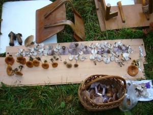 Umweltsünder haben hier einige Möbel am Waldrand entsorgt. Auf diese Weise konnten sie noch genutzt werden, indem die gesammelten Pilze übersichtlich zur Kontrolle ausgebreitet werden konnten. 30.10.2010.