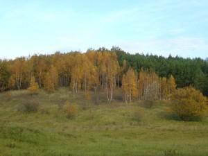 Spätherbstliche Landschaft bei Neukloster am 30.Oktober 2010.