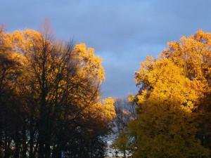 Wuderschöne, tief romantische Lichtverhältnisse gab es gestern Nachittag. Golden leuchtet das Laub der Eichen am Seeblick in Wismar vor blaugrauen Wolken. Die Linden im Voerder- und Hintergrund haben ihr Laub schon längst verloren. 07.10.2010.