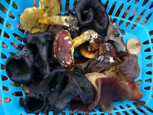 Aber nach und nach ist auch noch für den Speisepilzfreund der eine oder andere Fund dabei. Ein Mischgericht soll bekanntlich am besten Schmecken. 21.11.2010.