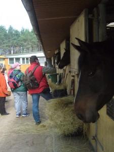 Freundlich begrüßten uns die Pferde des Reitsportvereins und bekamen zur Belohnung ihre erhoffte Streicheleinheit.