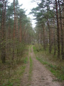 Und weter ging es durch den sangigen Kiefernwald der Wotenitzer Tannen.