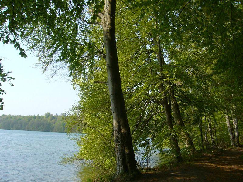 Das warme, sonnige Wetter der letzten Zeit hat die Natur rasant nach vorne gebracht. Noch vor wenigen Tagen waren die Buchen noch kahl, jetzt stehen sie bereits fast in vollem Grün wie im Sommer.
