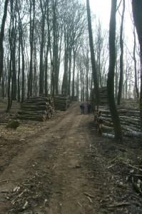 Immer wieder große Holzstapel längst der Wege.