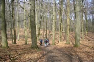 Aber es gab auch noch weniger verwüstete Bereiche im Staatsforst Jamel, so wie hier dieser wunderschöne Buchenwald.