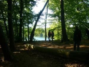 Zur Beginn unserer Exkursion, an nördlichen Bereich des Sees, dominieren mächtige Buchenwälder.