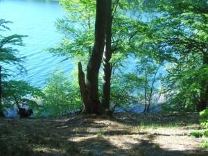 Steil fällt der Hang zum Neumühler See ab.