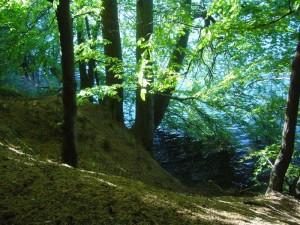 Pilzesammeln ist hier eine abenteuerliche Angelegenheit, bei der Bergsteigerische Fäkugkeiten gefragt sind.