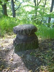 Natürlich ist es nur ein Holzsteinpilz, aber von jemandem dort platziert, der die Öklogie von diversen Dickröhrlingen, allem voran Steinpilzen, kennt.