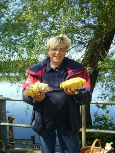 Oder diese frischen Schwefelporlinge von einer alten Weide, die uns hier Pilzfreundin Sabine Kock aus Schwerin freundlich präsentiert.