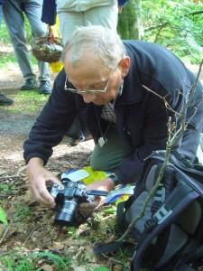 Nicht nur die Leute vor gesundheitlichen Schäden durch Pilzgenuss zu schützen ist das anliegen von Klaus Warning, sondern auch die Pilzfotografie. Hier geben Rillstielige Lorcheln ein gutes Fotomotiv ab.