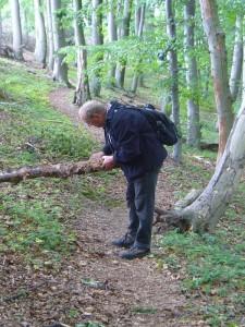 Klaus Warning untersucht hier diesen Erlenstamm, an dem sich ein resupinater Feuerschwamm befindet. Unterseitig liegender Äste und Stämme sind vielerlei Pilzarten zu hause.