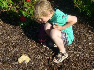 Sohn Jonas erster Kontakt mit einem Schleimpilz endtete wie erwartet mit dem ruckartigem Rückzieher des Armes und einem energischen iiihhh!