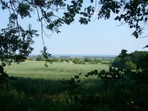 Vom Waldrand hat man immer wieder einen wunderbaren Blick über Felder und Kühlungsboern hinweg bis zur Ostsee.