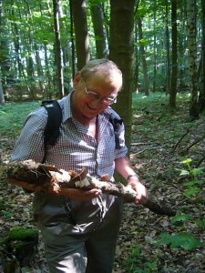 Pilzberater Klaus Warning aus Bützow freut sich über diesen Knüppel, der mit Judasohren besetzt war.