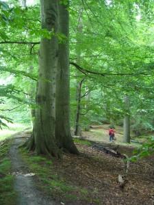 Und weiter geht es durch die mächtigen Buchenwälder. 17.07.2011.