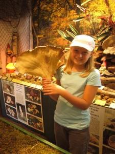 Diesen wirklich gewaltigen Riesen - Krempentrichterling brachte Frau Schmidtlein aus Heidekaten zusammen mit ihrer Enkelin Anne Keßler (Bild) in die Pilzberatung. Die Art ist nicht besonders häufig und kann sogat gegessen werden. Dieser wurde aber für die Pilzausstellung spendiert.