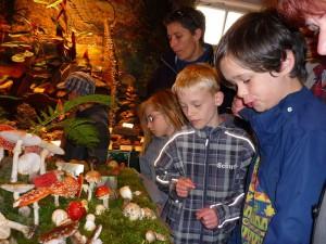 Am Montag besuchten dann noch Schüler aus Schwerin unsere Ausstellung. Leider hatte es keine Wismarer Schule fertig gebracht, bei einer so wichtigen Naturausstellung mit ihren Schülern vorbei zu Schauen.