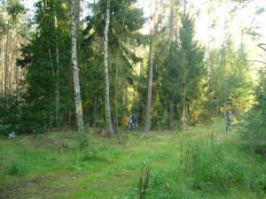 Das Gebiet bei Weberin ist ein moosreicher, sandiger und saurer Nadelmischwald mit einigen Laubbäumen, besonders Birken. Für Speisepilzsucher ideal.