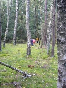 Hier hieß es immer wieder Bücken. Pfifferlinge, Maronen, Birkenpilze und vor allem Geschmückte Gürtelfüße bevölkerten den Waldboden.