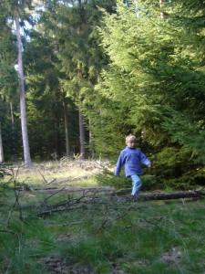 Los ging es im Maronenwald über Stock und Stein. Papa mußte natürlich den Korb tragen.