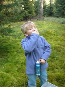 Aber hier wachsen auch die scharfen Zedernholz - Täublinge. Manchmal muß man Kosten, für Jonas sicher eine beeindruckende Erfahrung, wie das auf der Zunge prickelt. Da tut man gut daran ein Getränk am Mann zu haben.