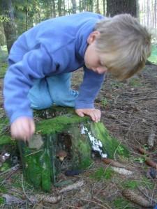 Da hat sich doch diese Marone direkt im Baumstumpf versteckt, aber Jonas hat sie doch entdeckt!.