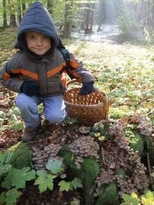 Jonas entdeckt hier einen alten Eichen - Stubben voller Pilze. Welche könnten das wohl sein? Papa wird es sicher wissen!