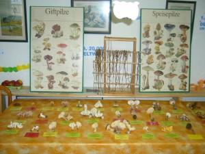 Auf der kleinen Ausstellungsfläche lagen frische Pilze zum anfassen und beschnuppern. Interessante Gerüche waren da warnehmbar z.B. nach Fisch, Honig, Maggiewürze oder Kokosflocken.