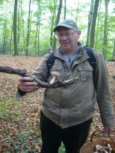 """Fast die gesamze Saison über finden wir den Breitblättrigen Rübling in feuchteren Wäldern. Mit seinen starken Myzelsträngen """"kriecht"""" er im Erboden entlang auf der Suche nach modrigem Holz."""