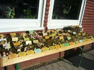 Mit 45 Pilzarten war die von Herrn Krüger extra für uns neu gebaute Ausstellungsfläche gut ausgelastet.