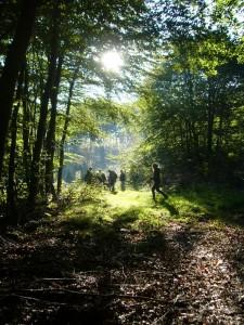 Vom Langen Berg aus starteten wir durch die Jülchendorfer Buchen in die weiträumigen Wälder und Forste zwischen Jülchendorf und Demen.