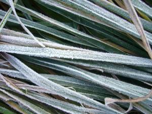 Außerhalb des Waldes waren am Morgen die Gräser der Wiesen noch mit bizarrem Rauhreif geschückt. Unter das noch schützende Blätterdach des Waldes vermochte der Frost aber noch nicht einzudringen.