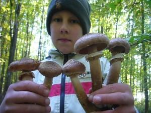 Da macht auch unseren jüngsten das Pilzesammeln Spaß. Schöner können Hallimasch kaum noch sein! Foto am 23.10.2011 im Wald bei Kneese.