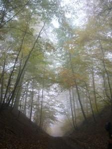 Nebelige Novemberstimmung auf dem Langen Berg im Schlemminer Staatsforst am 29.10.2011.