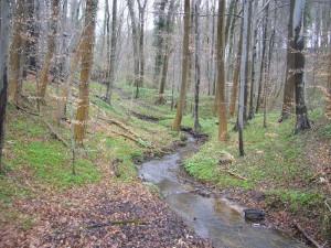 Idyllisch gelegen in einem teils tief eingschnittenen Bachtal entpsringt die Glashäger Quelle. Wanderwege führen durch dieses naturbelassene Bachtal bei Bad Doberan.