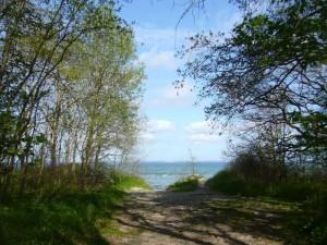 Hinter dem Küstenschutzwald lädt ein wunderschöner Sandstrand im Sommer zum Baden in der Ostsee ein.