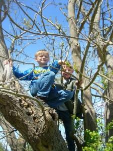 Bei den Kindern war heute kräftiges Toben angesagt und selbst die Bäume waren vor ihnen nicht sicher, so wie hier bei Jonas und Jannick unschwer zu erkennen ist.
