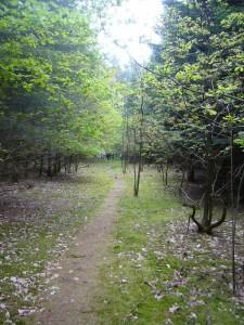Sodann brachen wir auf diesem Trampelpfad auf zu unserer Pilzwanderung durch den Holmer Wald.