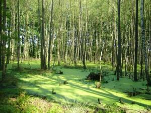 Mit diesem schönen Stimmungsbild aus dem Wald bei Warnkenhagen vom 30. 06. 2012 möchte ich das Juni - Tagebuch schließen
