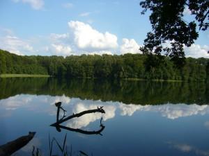 Still und idylisch liegt der Deichelsee am Nachmittag des 03. August 2012. Hier wächst zu besseren Zeiten auch der legendäre Satans - Röhrling