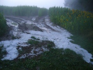 Während es in Keez überweiegend stark regnete mit etwas Hagel gemischt, gab es z. B. bei Sagsdorf richtigen Hagelschlag. Noch Stunden später dampften zusammengspülte Eisflächen in der Abenddämmerung.