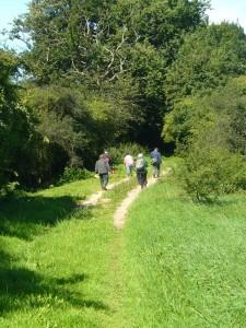 Zwischendurch geht es auch mal an Wiesen vorbei und durch schattige Hohlwege hindurch. Hier fällt links des Weges trockenes Geäst auf.