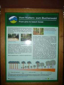 Die Naturparkverwaltung hat längst der Wanderwege im Radebachtal sehr schöne und informative Informationstafel aufgesttelt, die hoffentlich noch lange unversehrt viel Wissenswertes über den Wald vermitteln mögen. Leider hat das Gebiet derzeit erheblich an attraktivität verloren, aber bis zum Jahr 2050 soll es sich ja wieder geändert haben!