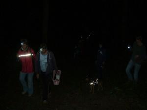 Wie ein Schwarm Glühwürmchen bewegen wir und durch den finsteren Wald. Ein außergewöhlicher Pilzausfug, von dem wir wohl noch lange schwärmen werden.