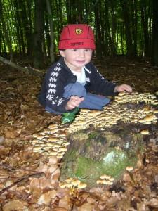 Der kleine, dreijährige Michel ist begeistert von so vielen Pilzen auf einmal. Liebevoll streichelt er ei bei ihnen. Über so viel zuneigung können sich die ansich hübschen, aber leider giftigen Grünblättrigen Schwefelköpfe sonst wahrlich nicht erfreuen. Übrigens, man darf auch giftige Pilze ohne weiters anfassen, ohne sich gleich die Hände waschen zu müssen!