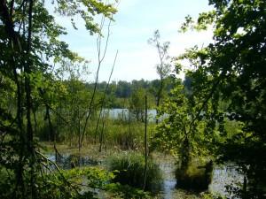 Integriert in den umfangreichen Schlemminer Forst ist auch Deutschlands ältestes Naturschutzgebiet, der Schwarze See. Über einen langen Holzsteg kann man diesen phantastischen Moorsee auch überwandern. Er ist der höchstgelegene See Mecklenburgs und wurde 1936 unter Schutz gestellt.