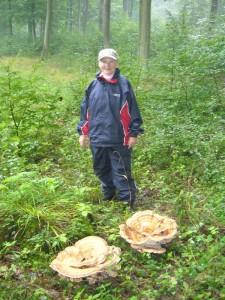 Nach wenigen Schritten entdeckte Helga Köster gigantische Pilzrosetten des Riesenporlings. Sie wuchsen um einen alten Eichenstumpf herum.